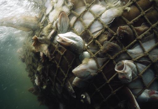 fish-dead-689664-sw.jpg