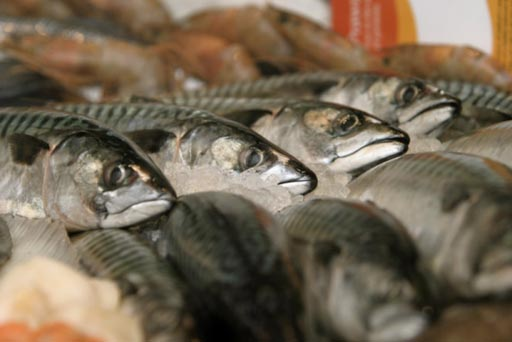 mackerel pic.jpg